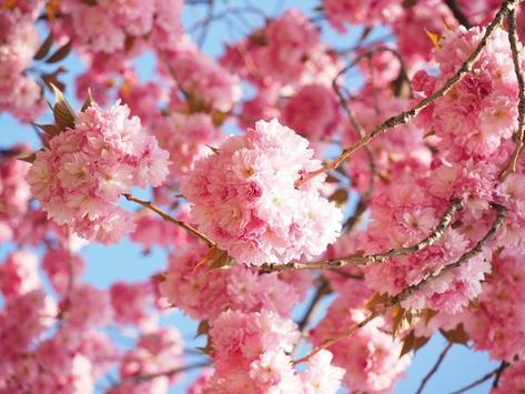 Bloom Wallpapers screenshot 15