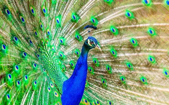 Colorful Wallpapers screenshot 7