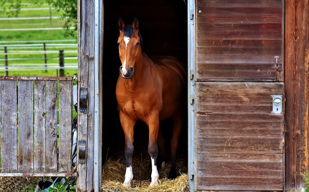 Pferde Hintergrundbilder Fürs Handy