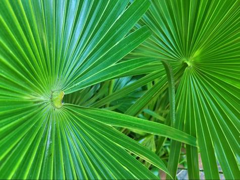 Design Green Wallpapers screenshot 2
