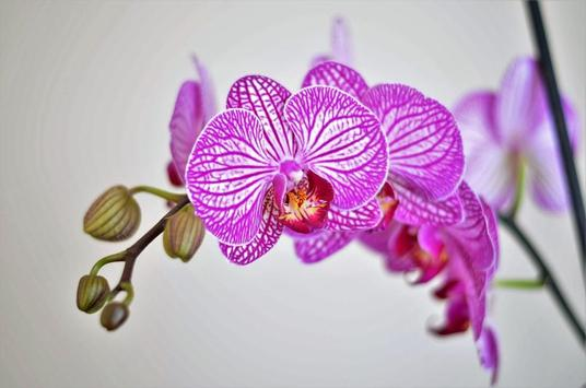 Design Pink Wallpapers screenshot 8