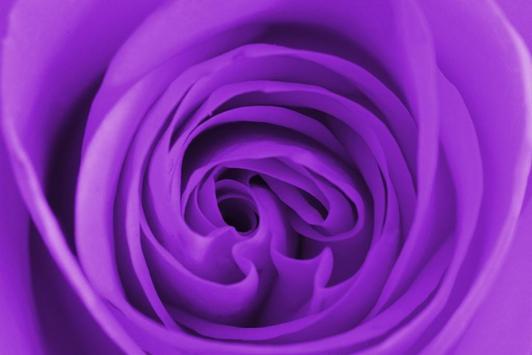 Design Purple Wallpapers screenshot 10