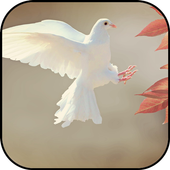 Dove Wallpapers icon