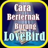Cara Berternak Burung LoveBird icon