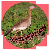 Canto Da Ciriema Quebra Canoa icon