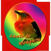 Canto do Uirapuru icon
