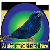 Azulao canto Paraná Puro icon