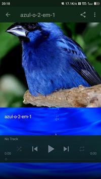 Azulao canto Paraná Puro screenshot 2