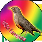 sabia laranjeira canto classic icon