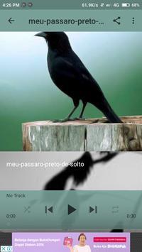 Pássaro Preto Canto Mateiro screenshot 2