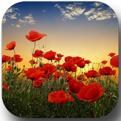 Sunset over a field of poppies icon