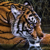jungle animals live wallpapers icon