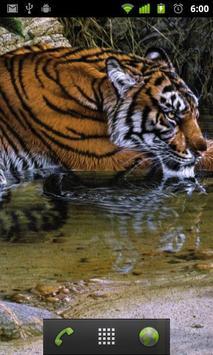 jungle animals live wallpapers apk screenshot