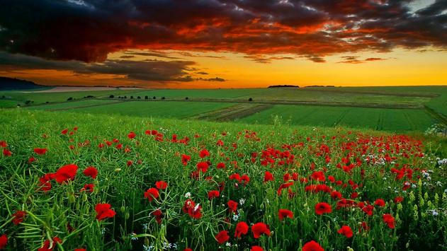 4k nature wallpaper collection for android apk download - Nature wallpaper apk ...