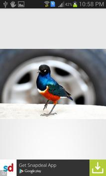 Birds Wallpapers apk screenshot