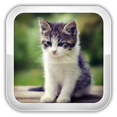 Cat Games For Kids icon
