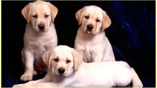 HD Dogs Wallpapers screenshot 2