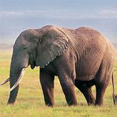 HD Wild Animals Images icon