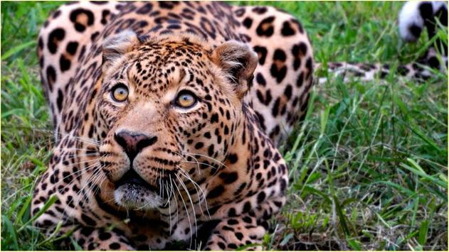 HD Wild Animals Images apk screenshot