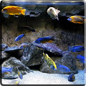 Aquarium HD Video Wallpaper icon