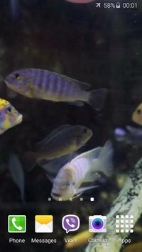 Aquarium HD Video Wallpaper apk screenshot