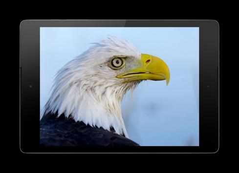 Eagle 3D Video Live Wallpaper screenshot 7
