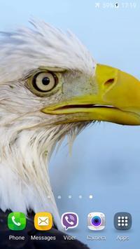 Eagle 3D Video Live Wallpaper screenshot 4