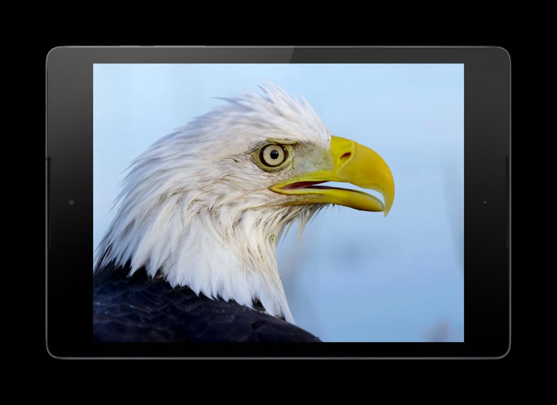 Eagle 3D Video Live Wallpaper Apk Screenshot