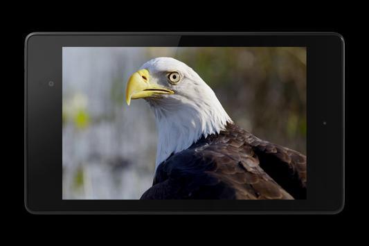 Eagle 3D Video Live Wallpaper screenshot 8