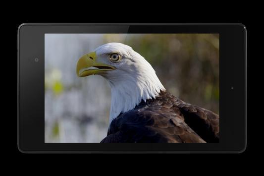 Eagle 3D Video Live Wallpaper screenshot 9