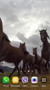 Horses Video Live Wallpaper poster