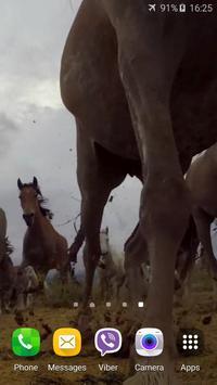 Horses Video Live Wallpaper apk screenshot