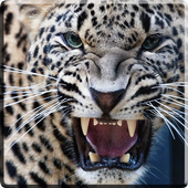 Leopard Video Live Wallpaper icon