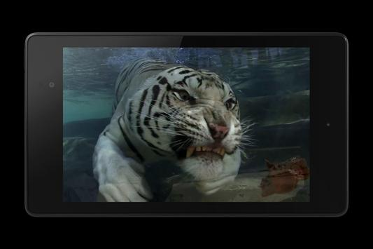 Tiger Video Live Wallpaper screenshot 10