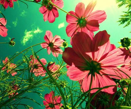 Flower Jigsaw screenshot 4