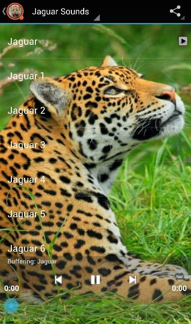 Jaguar Sounds for Android - APK Download