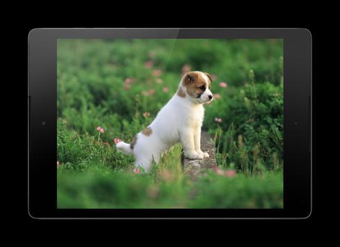 Cute Little Puppies Lock Screen apk screenshot