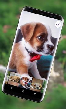 Cute Little Puppies Lock Screen screenshot 8