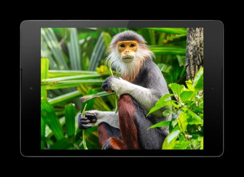 Funny Monkey Lock Screen apk screenshot