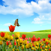 Stunning Nature Wallpapers icon