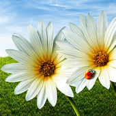 Stunning HD Nature Backgrounds icon