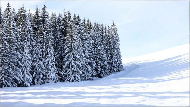 Stunning HD Nature Backgrounds apk screenshot