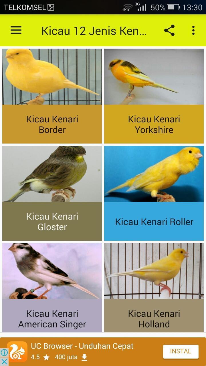 Kicau 12 Jenis Burung Kenari For Android Apk Download