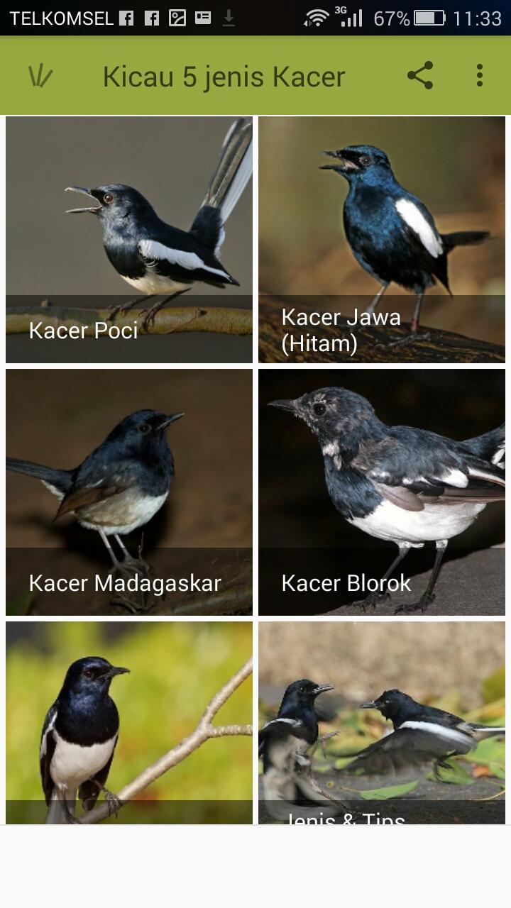 """Kicau 5 Jenis Burung Kacer安卓下载 Å®‰å""""版apk Ņè´¹ä¸‹è½½"""
