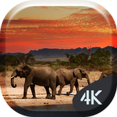African Animals 4K Live icon