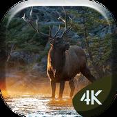 Forrest Deer 4K Live Wallpaper icon