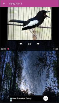 Suara Kacer Mabung apk screenshot