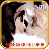 Imagenes de Lobos icon
