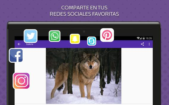 Imagenes de Lobos screenshot 11