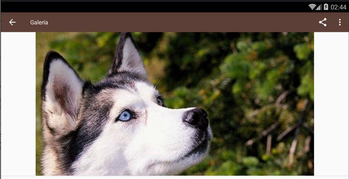 Imagenes de Lobos apk screenshot